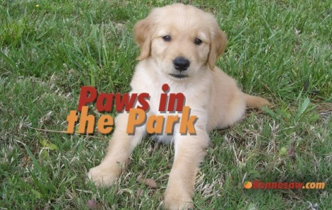 Paws in the Park